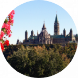 Tree tops in Ottawa, Canada, with pink flowers in the forefront and a grand building in the background with lots of spires.