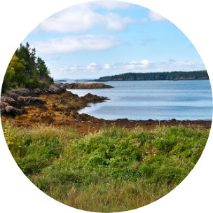 Scenic photo with greenery in the forefront, leading onto water in New Brunswick, Canada.